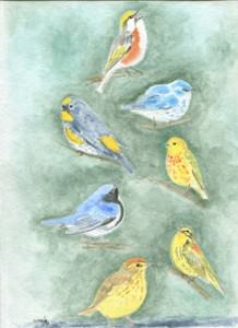 Setophaga Warblers Deciduous by Wenfei Tong