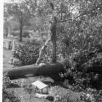 Hurricane of 1938 Cleanup